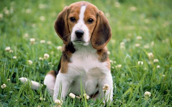 狗味到底是什么味,是什么引起的